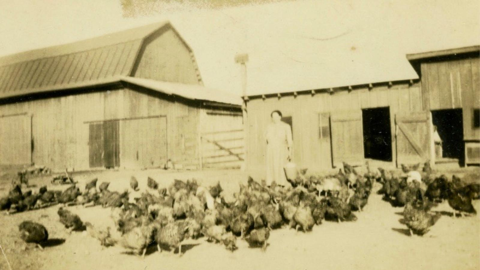 Lenora Hammond Lapp standing amongst the poultry she raised in Ross County, Ohio.